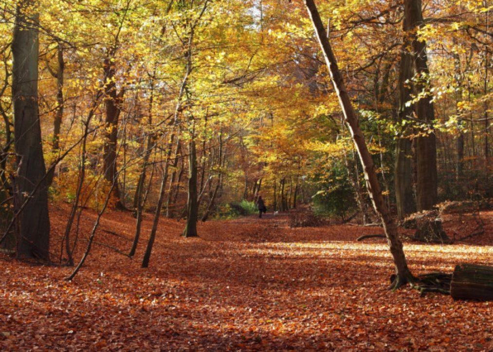 Autumn Walk in Burnham Beeches