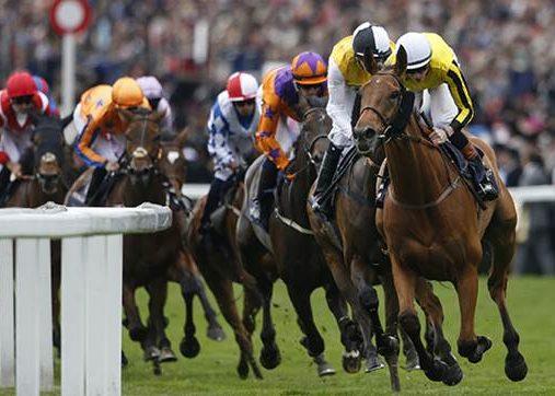 Ascot Race Course Horses